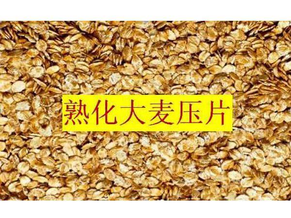 熟化压片大麦