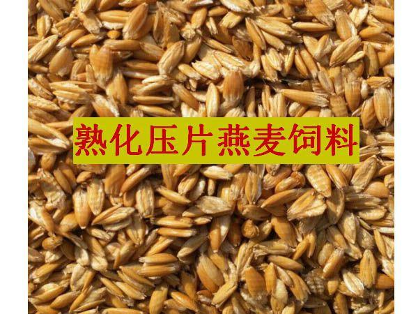熟化压片燕麦饲料