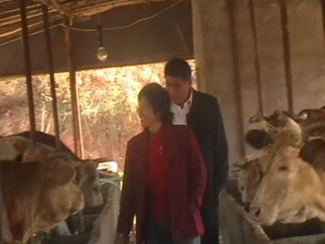 青州肉牛宋老板养殖场