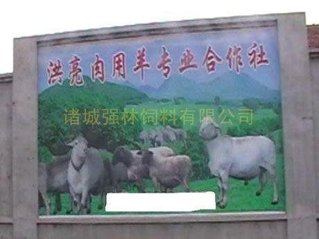 肉用羊专业合作社