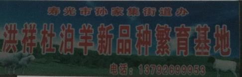 寿光洪祥杜泊羊繁育基地