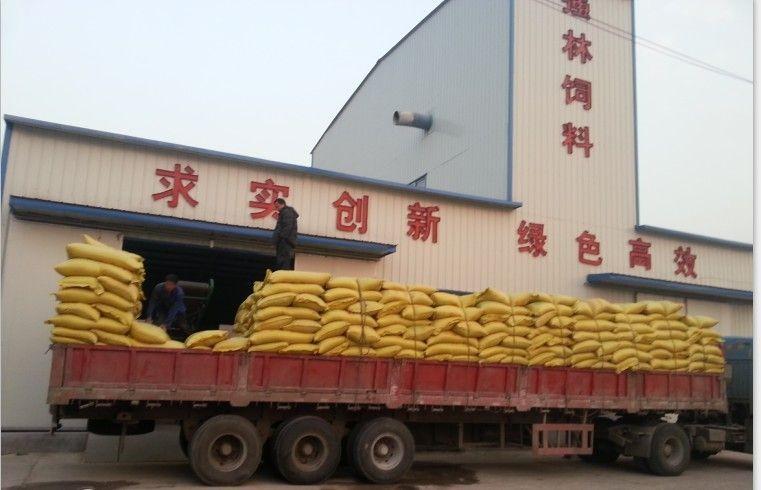 蒸汽熟化玉米压片装车现场