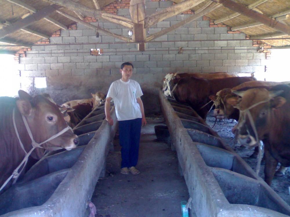 诸城肉牛养殖场李经理